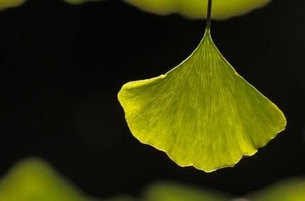 Fű – fa – virág