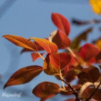 Őszi szépségek